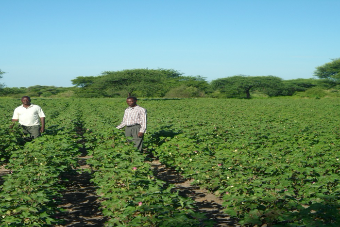 BioSustain_The-farmer-doing-pest-scouting-on-the-field-during-extension-visit-