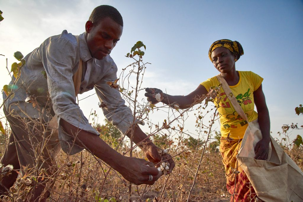 Cotton in Africa: Sustainability at a Crossroads 13