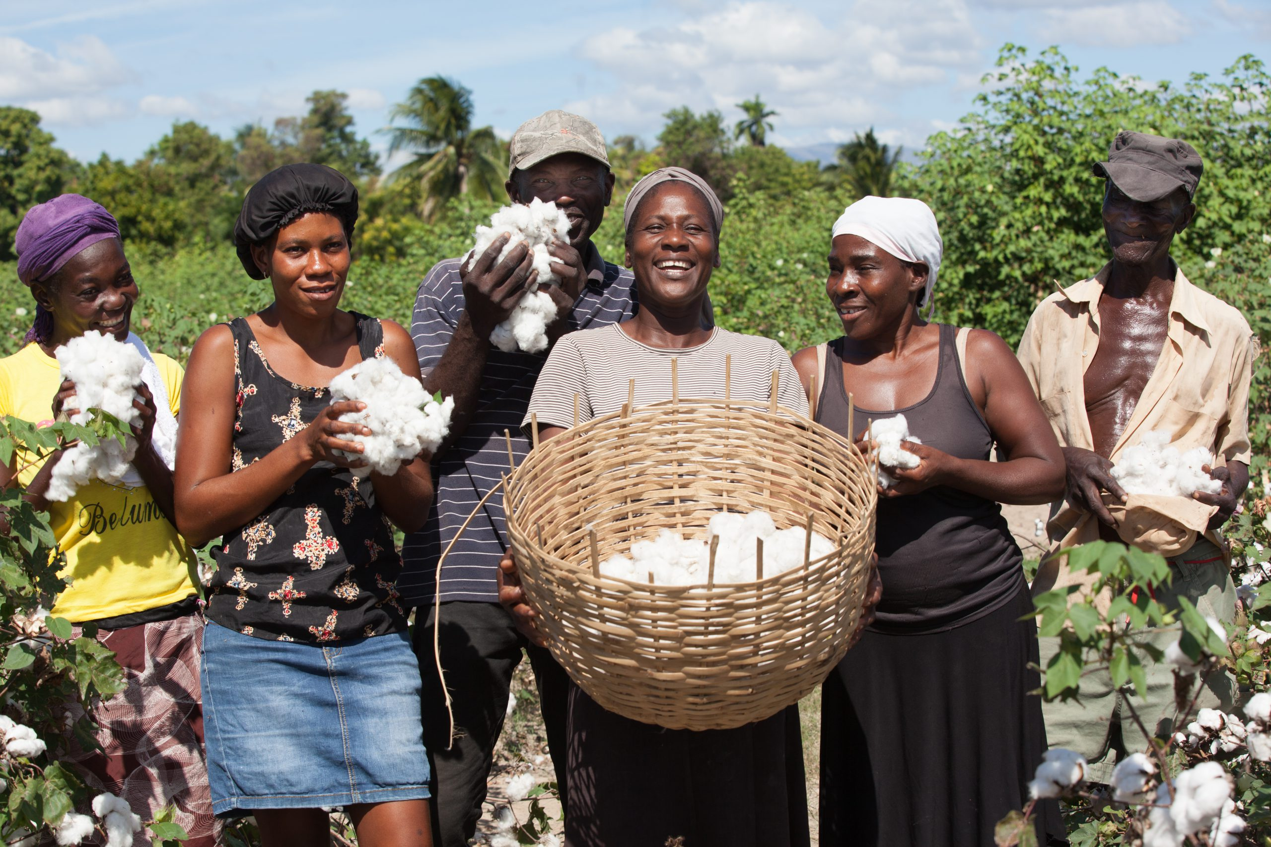 The Cotton Connection Between Puerto Rico and Haiti 1
