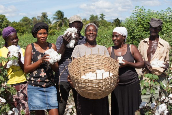 Timberland Is Helping Rebuild Haiti's Cotton Industry | By Fast Company 1